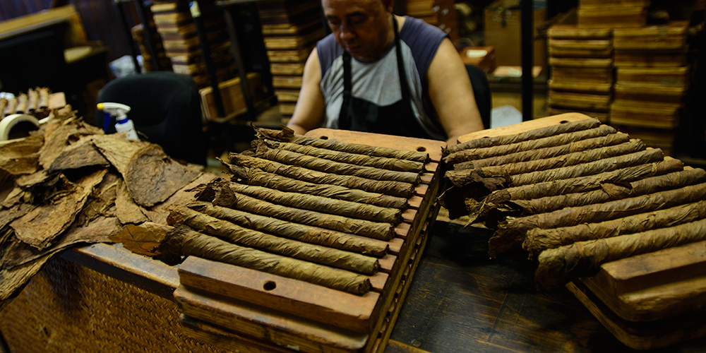 Freshly made Cigars